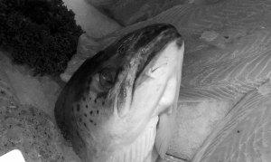 leon fishbone